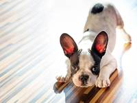 How to sell your home with the presence of pets